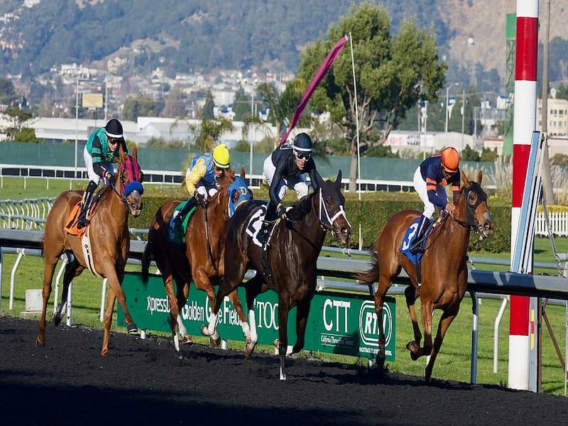đua ngựa 12bet
